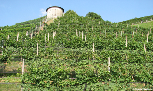 STUDIES ON BIODIVERSITY IN THE VINEYARD AGROECOSYSTEM OF SOUTHERN SWITZERLAND